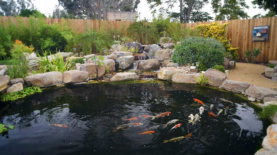 Everything needed to build a koi pond for Koi pool water